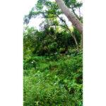 A4165天母自然別墅04